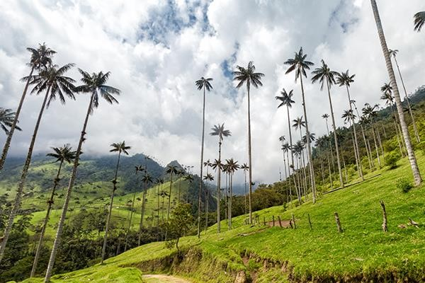 Tour al Valle de Cocora
